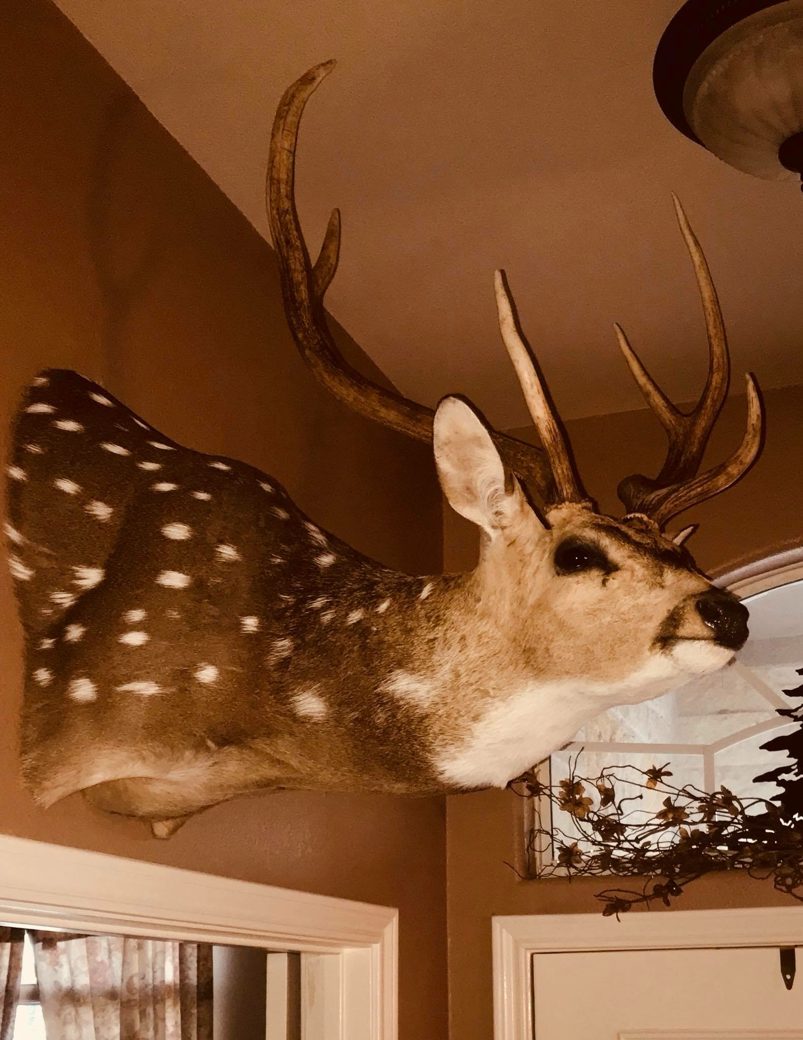Home - DB Wild Game Processing and Taxidermy